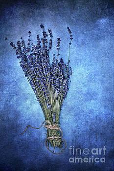 Textured Lavender  by Stephanie Frey