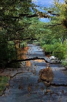Textured Path by Thomas Mack