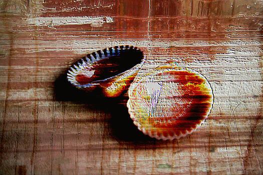 Linda Sannuti - Textured shells