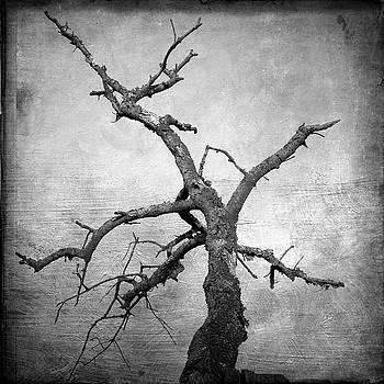 BERNARD JAUBERT - Textured tree
