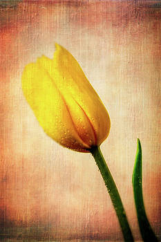 Textured Yellow Tulip by Garry Gay
