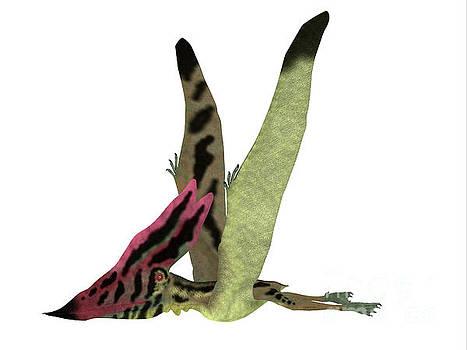 Corey Ford - Thalassodromeus Pterosaur Side View