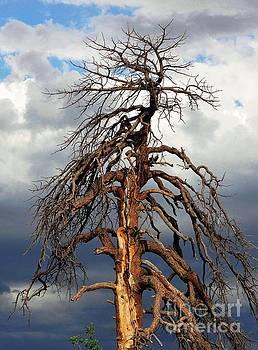 That Big Old Tree by Natalie Ortiz