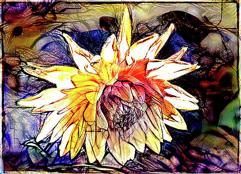 The Abstracted Dahlia  by Steve Taylor