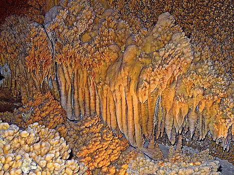 Lynda Lehmann - The Amazing Crystal Forest