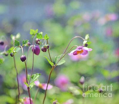 The Art of Flowers - Japanese Anemone by Kerri Farley