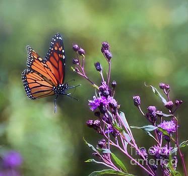 The Art of Summer - Monarch Butterfly in Flight by Kerri Farley