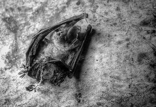 The Bat by Jeffrey Platt