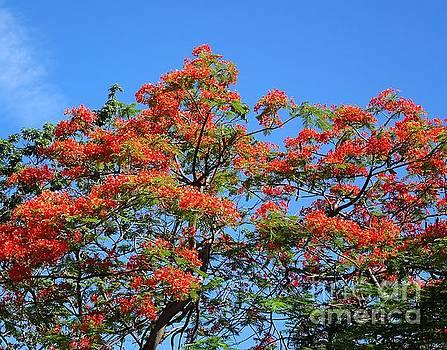 The Beautiful Flame Tree by Yali Shi