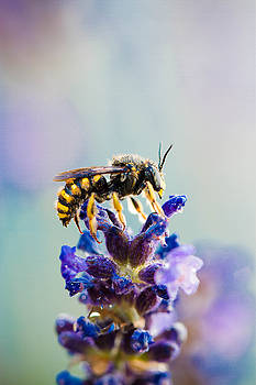 The Beauty of a Wasp by Danielle Silveira