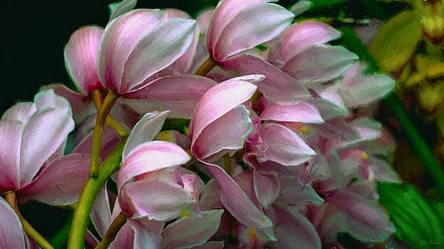 The Beauty of Orchids by John Rivera