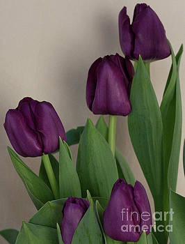 The Beauty of Purple Tulips by Sherry Hallemeier