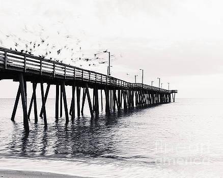 Michael McStamp - The Birds