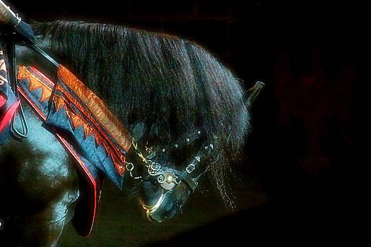 The Black Horse I by Amanda Struz