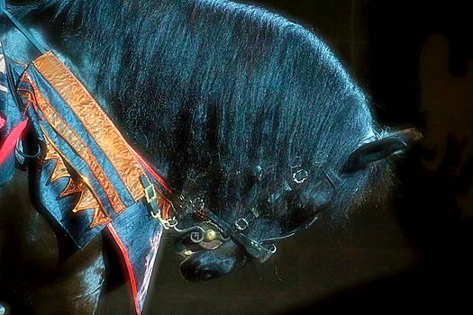 The Black Horse III by Amanda Struz