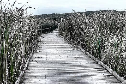 The Boardwalk by Michaela Preston