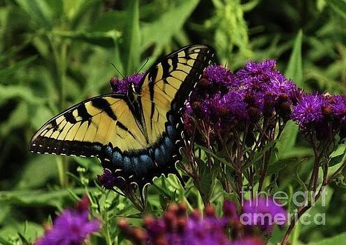 The Butterfly Buffet by J L Zarek