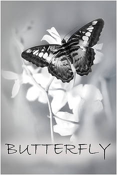 The Butterfly by John Fotheringham