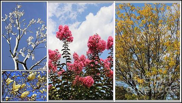 The Changing Seasons - A Collage by Dora Sofia Caputo Photographic Art and Design