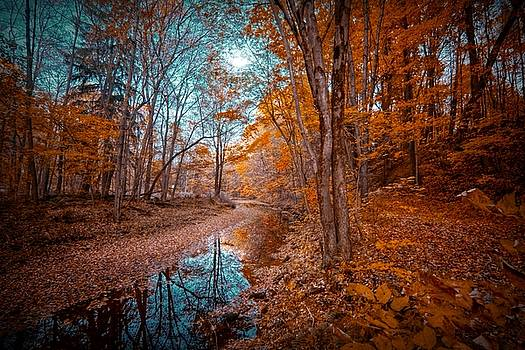 The Color of Fall by Linda Unger