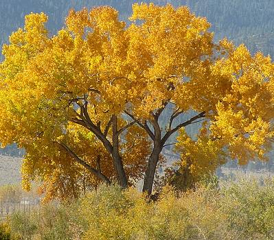 The Color Of Fall   by Susan Ince