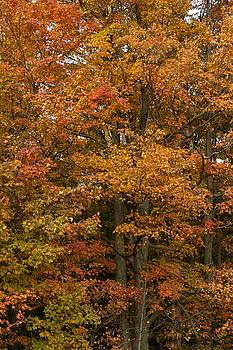 The Colors of Autumn by Amanda Kiplinger
