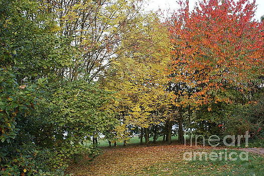 The Colours Of Autumn 3 by Carol Lynch