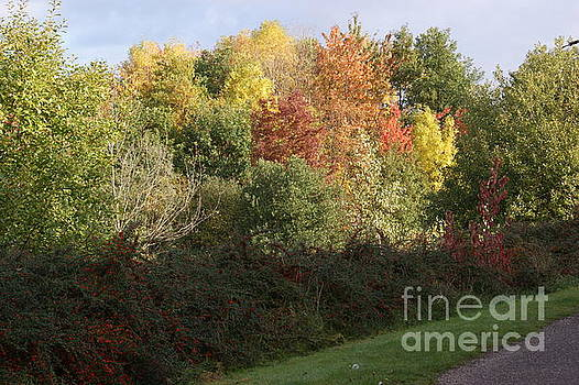The Colours Of Autumn 1 by Carol Lynch