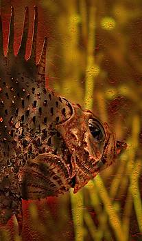 Thom Zehrfeld - The Copper Rockfish