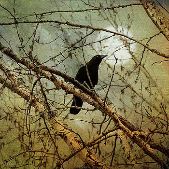 The Crow And The Moon by Theresa Tahara