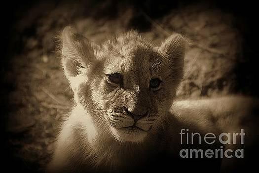 The Cub by Lisa L Silva