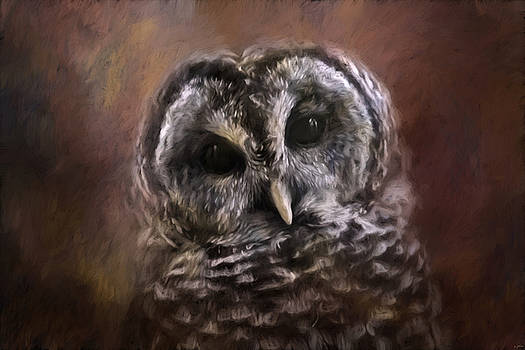 Jai Johnson - The Curious Owl