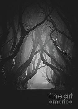 The Darkness by Pawel Klarecki