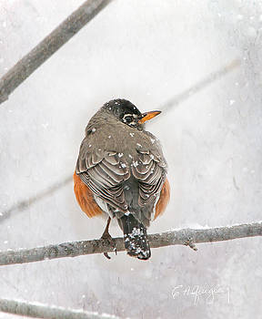 The Early Robin by Cheryl Ann Quigley