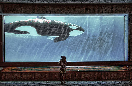 The Encounter by Heather  Rivet