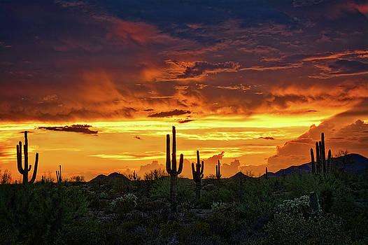 Saija Lehtonen - The Essential Beauty of the Southwest