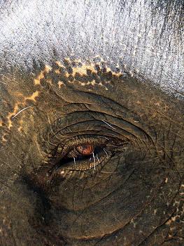 The Eye of Wisdom by Kelly Jones