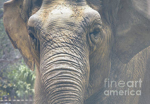 The Eyes Of Age by Mitch Shindelbower