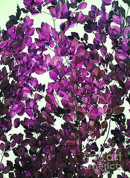 The Fall - Intense Fuchsia by Rebecca Harman