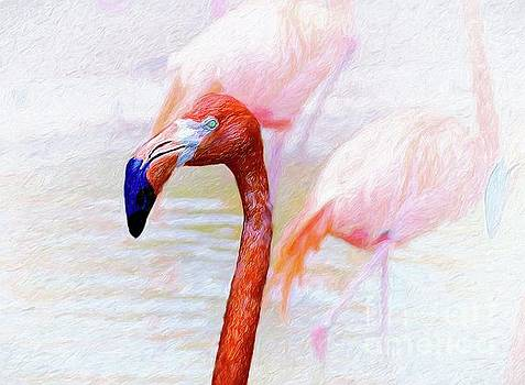 The Flamingo by John Kolenberg