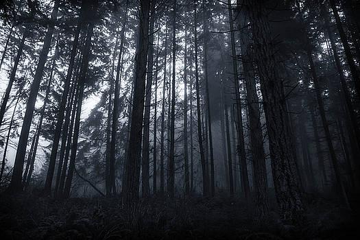 The fog by Alex Land