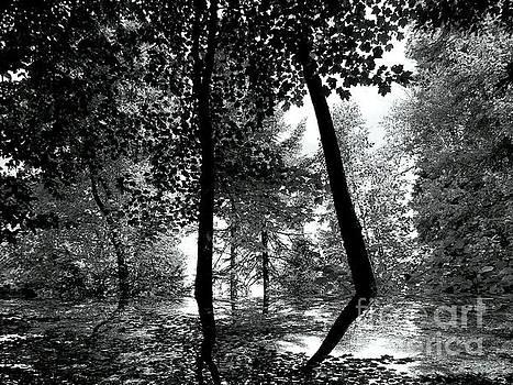 The Forest by Elfriede Fulda