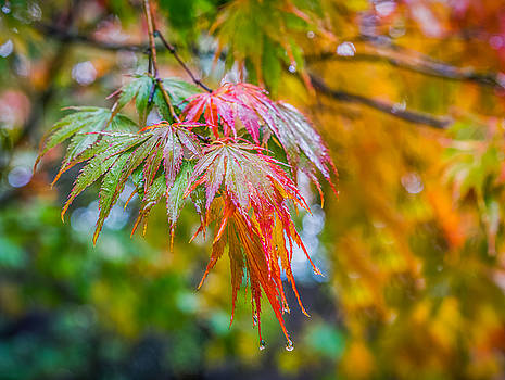 The Freshness of Fall by Ken Stanback