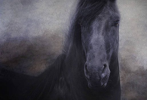 The Friesian by Sue Fulton