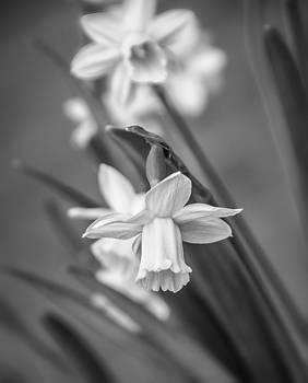 Steve Harrington - The Gentleness of Spring bw