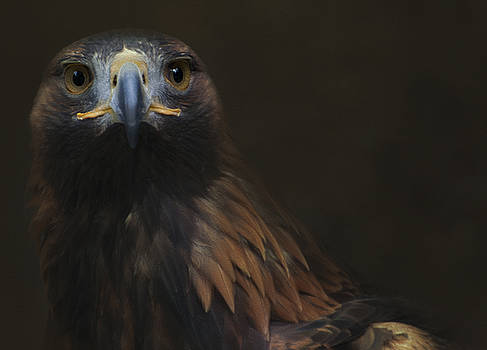 The Golden Eagle by Sue Fulton
