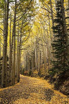 Saija  Lehtonen - The Golden Path
