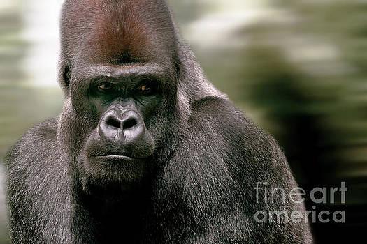 The Gorilla by Christine Sponchia