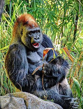 The Gorilla by Savannah Gibbs