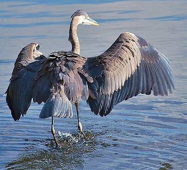 Joy Bradley - The Great Blue Heron